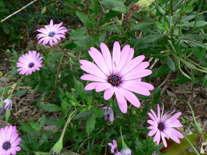 Spirituality For Life Spring Flowers In Australia